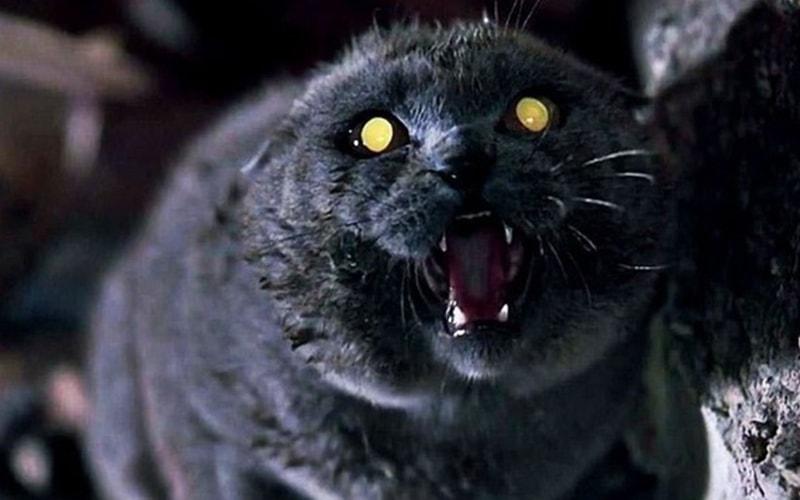 'Pet Sematary': Un deseo imposible se hace realidad pero viene con terribles consecuencias - Power Items